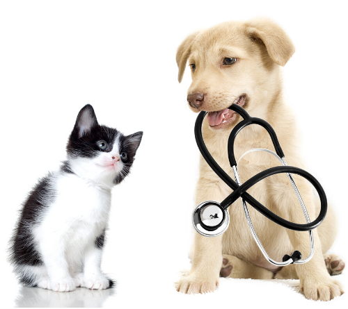 Why You MUST Be an Animal Health or Veterinary Technology Organization