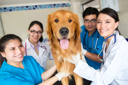 AVMA Census: Veterinary Profession Facing Greater Personnel Shortages