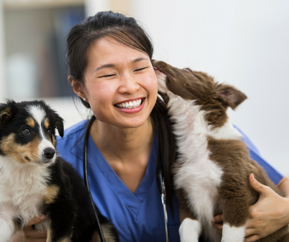 Are YOU Taking Advantage of Veterinarians' Pay-Increase Potential?