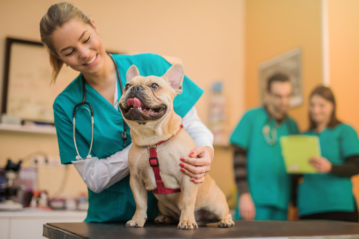 Why Hiring from Your Network can Fail for Animal Health and Veterinary Professionals